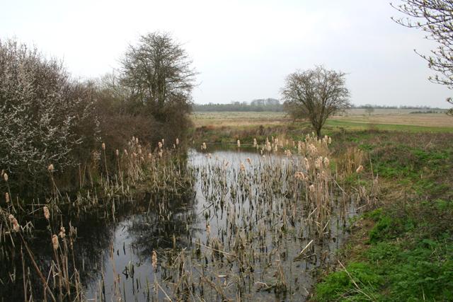 Pond of river walk at Lytes Cary - geograph.org.uk - 376905