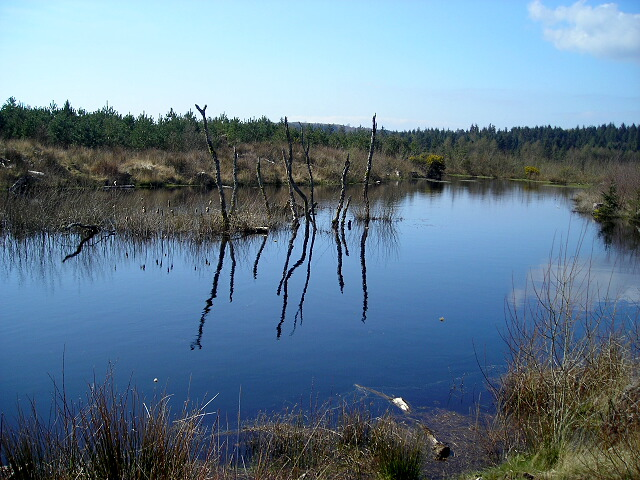 Smithland Loch in Dalbeattie Forest - geograph.org.uk - 392873