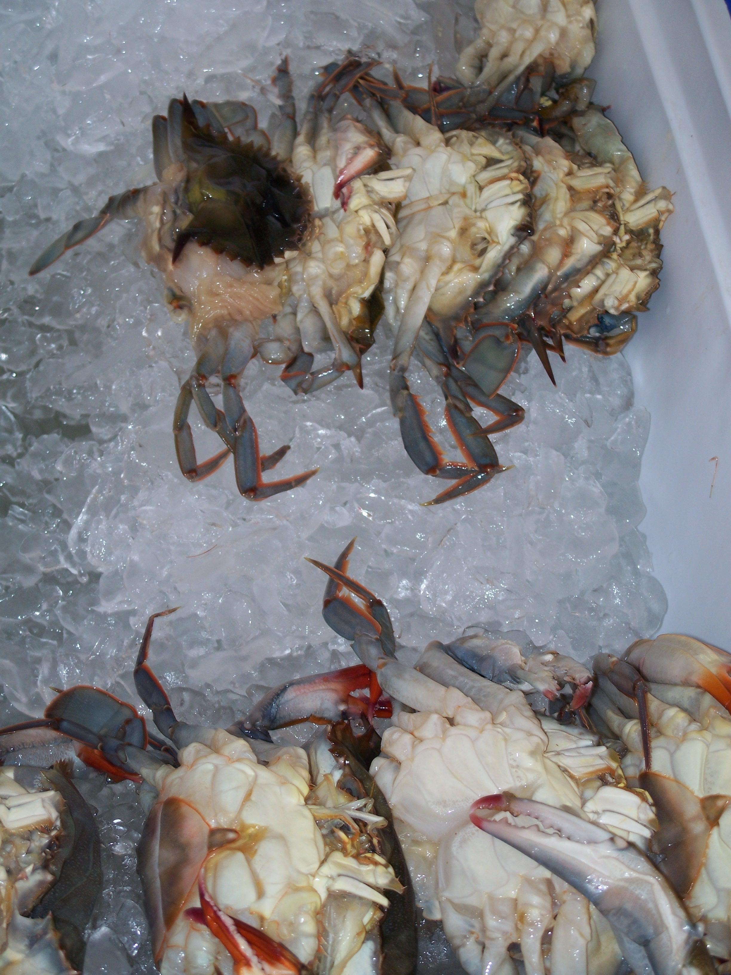 Soft Shell Crab Food Truck