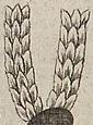 Tollnyalábok (heraldika).PNG