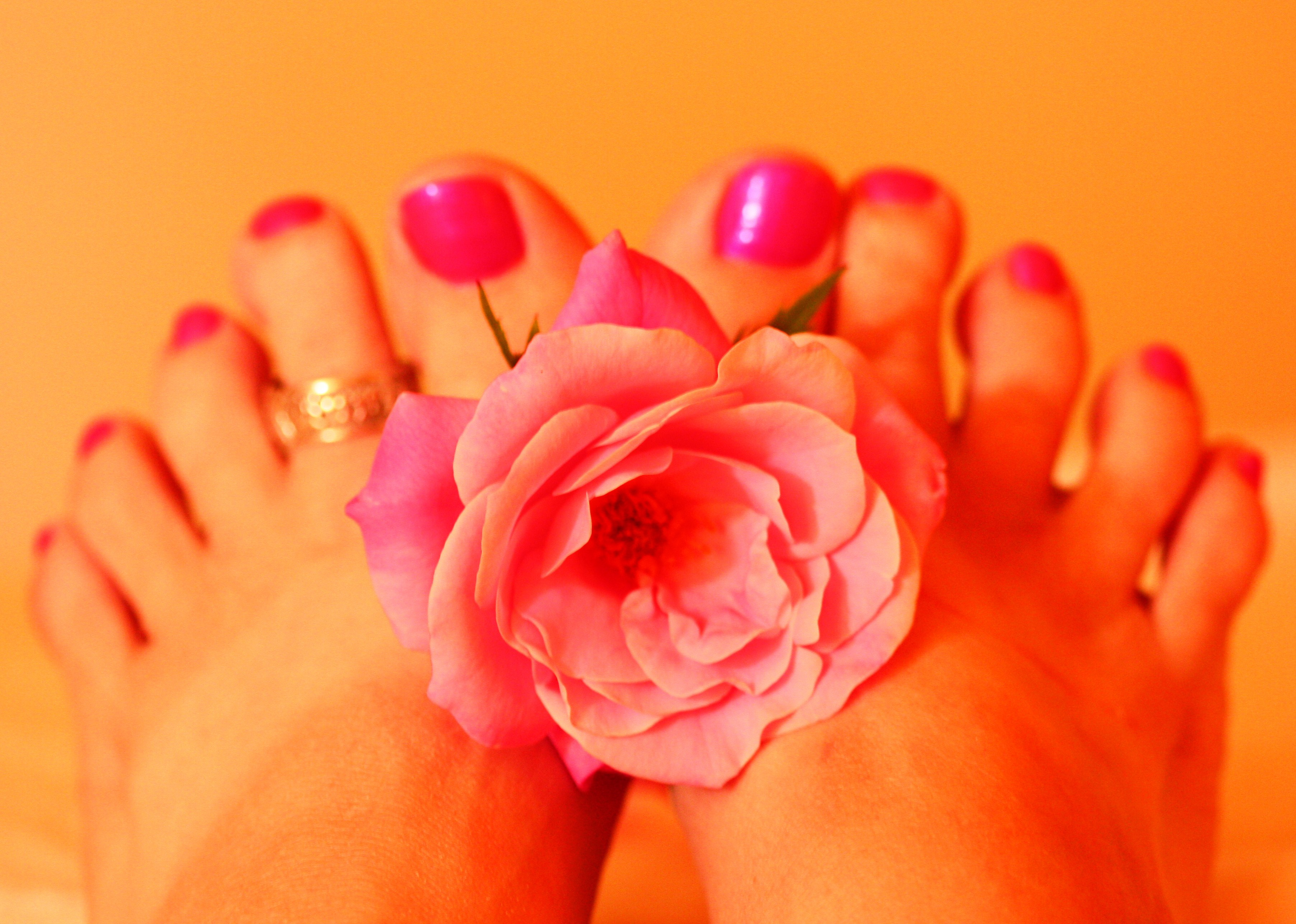 File:Woman's Feet Holding Pink Rose Fresh Pedicure.jpg