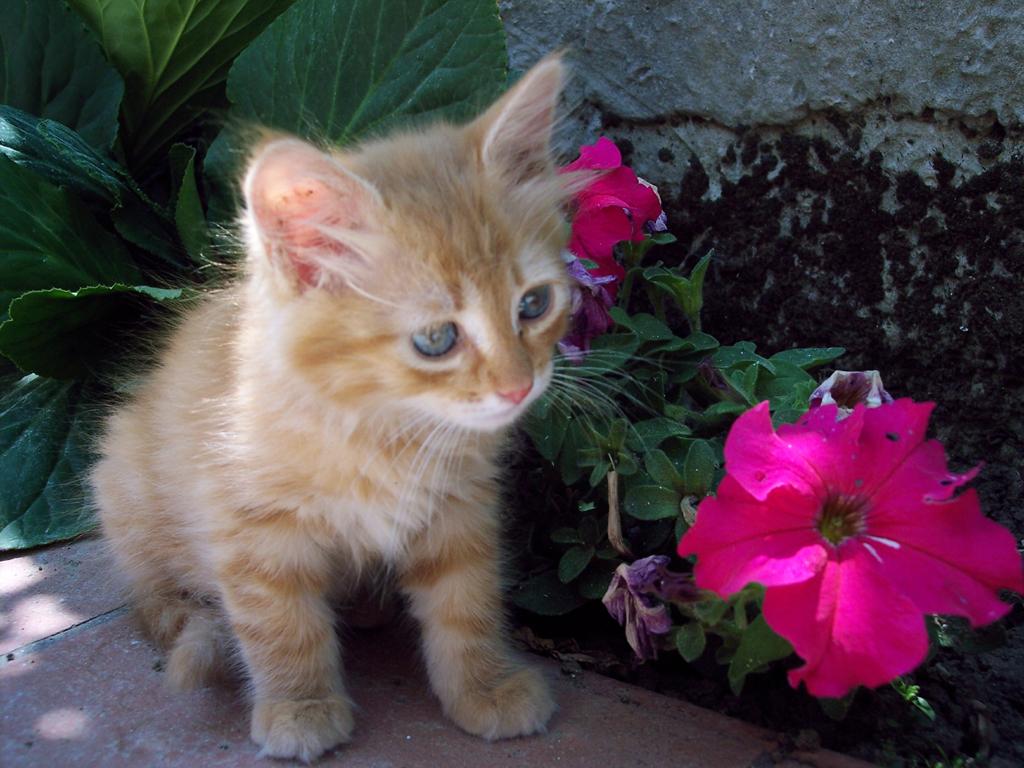 Ben noto Gatti rossi: carattere e personalità | Petpassion Blog DX72