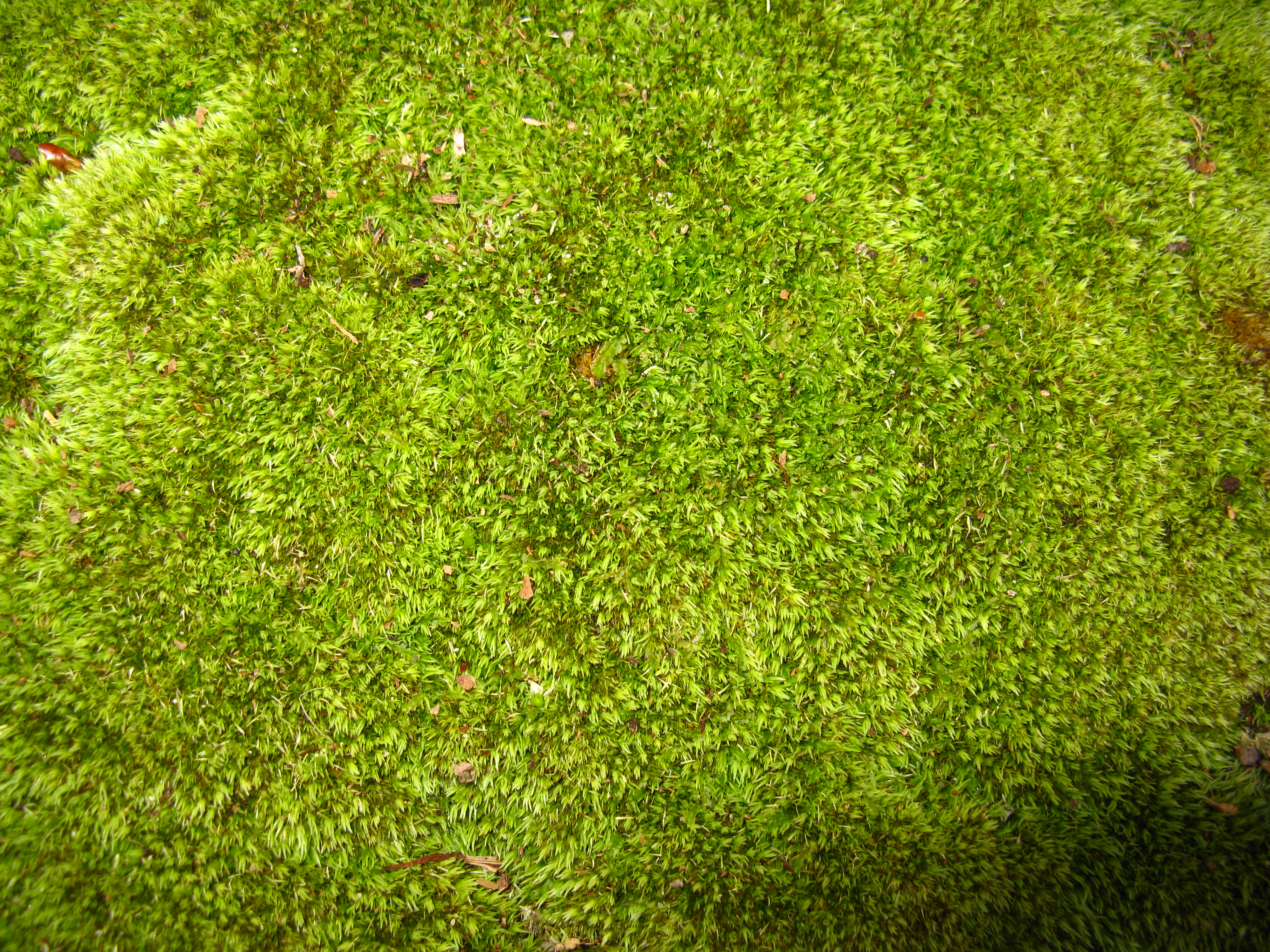 how to kill moss growing on your roof