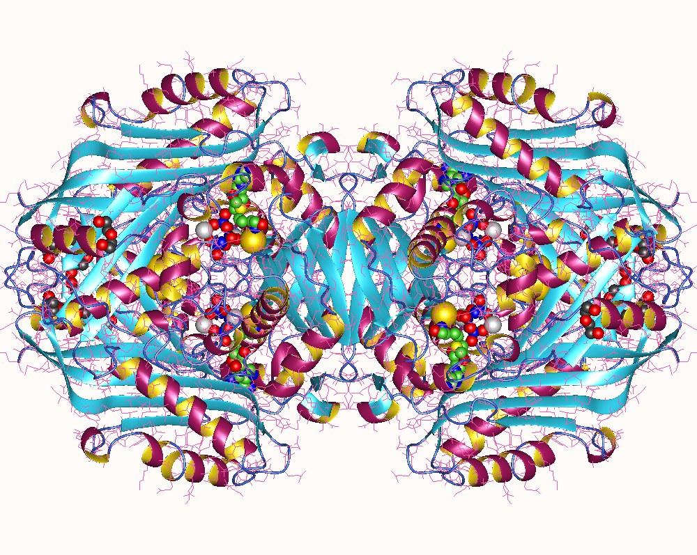 S-adenosylmethionine synthetase enzyme - Wikipedia