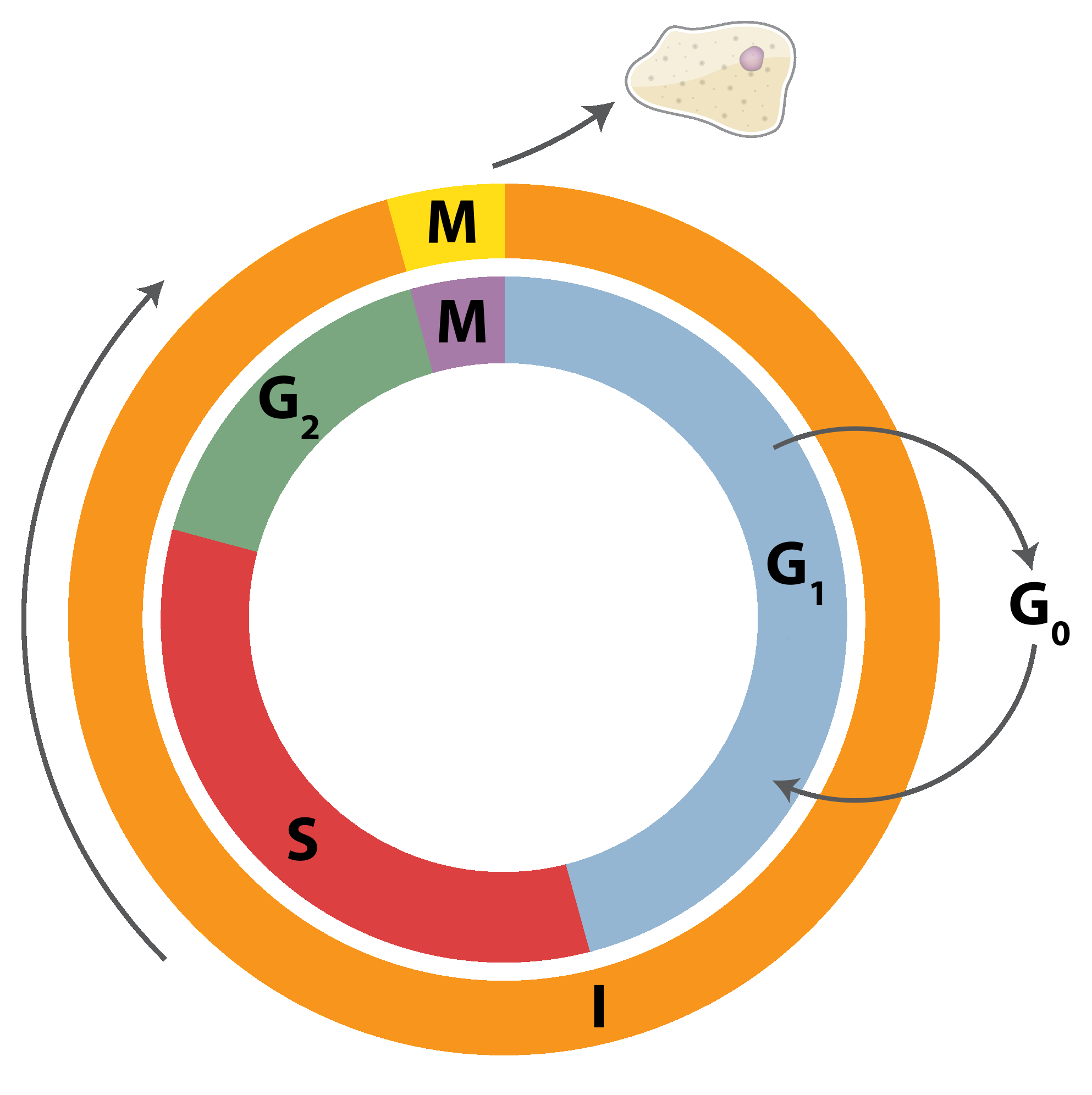 Filerankine Cycle Layoutpng Wikimedia Commons