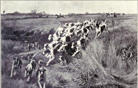 File:English Foxhounds in full cry.JPG