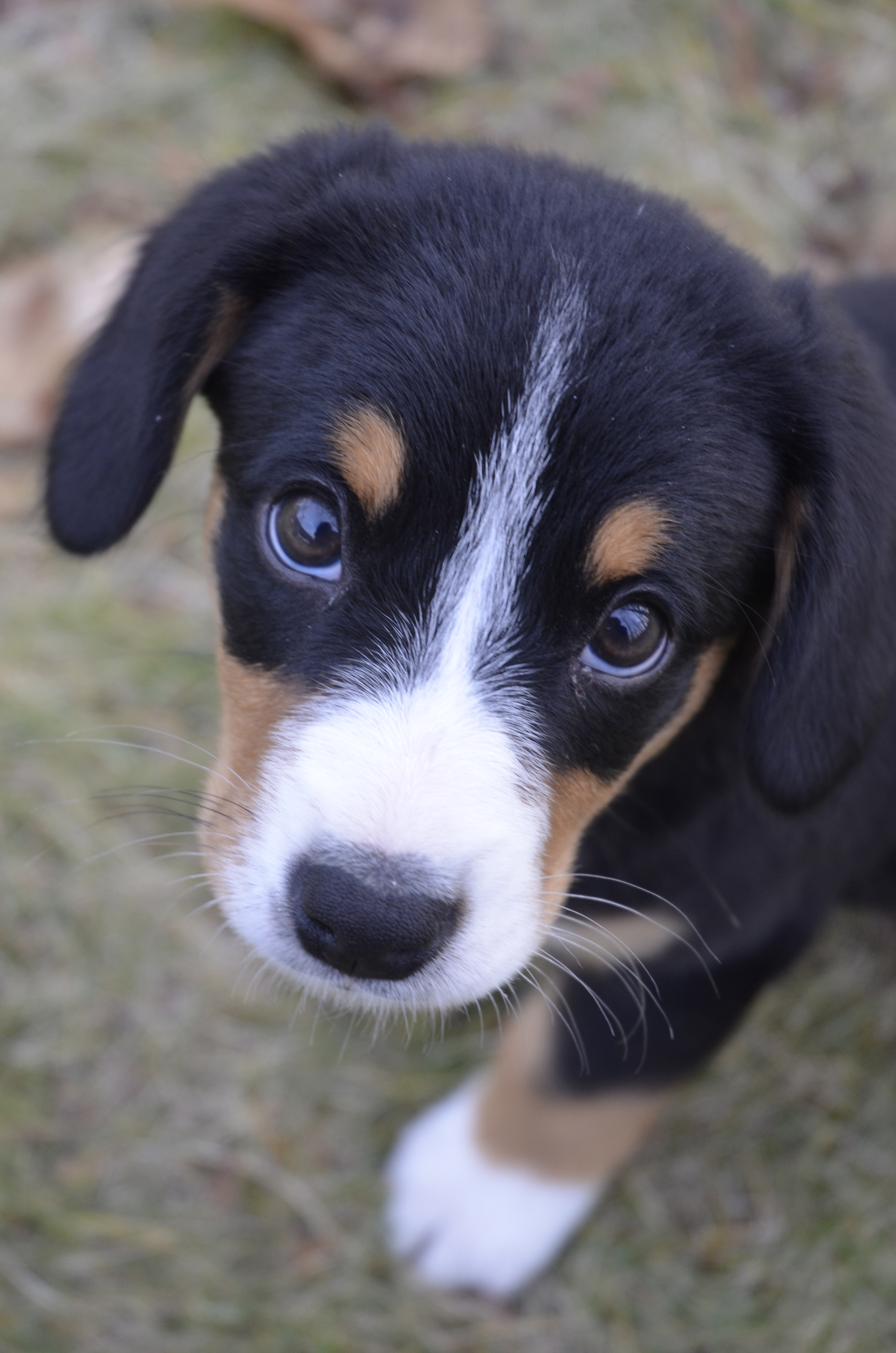 Cute Dog Breeds With Names
