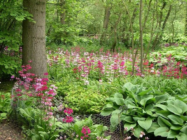 Fairhaven Woodland And Water Garden Wikipedia