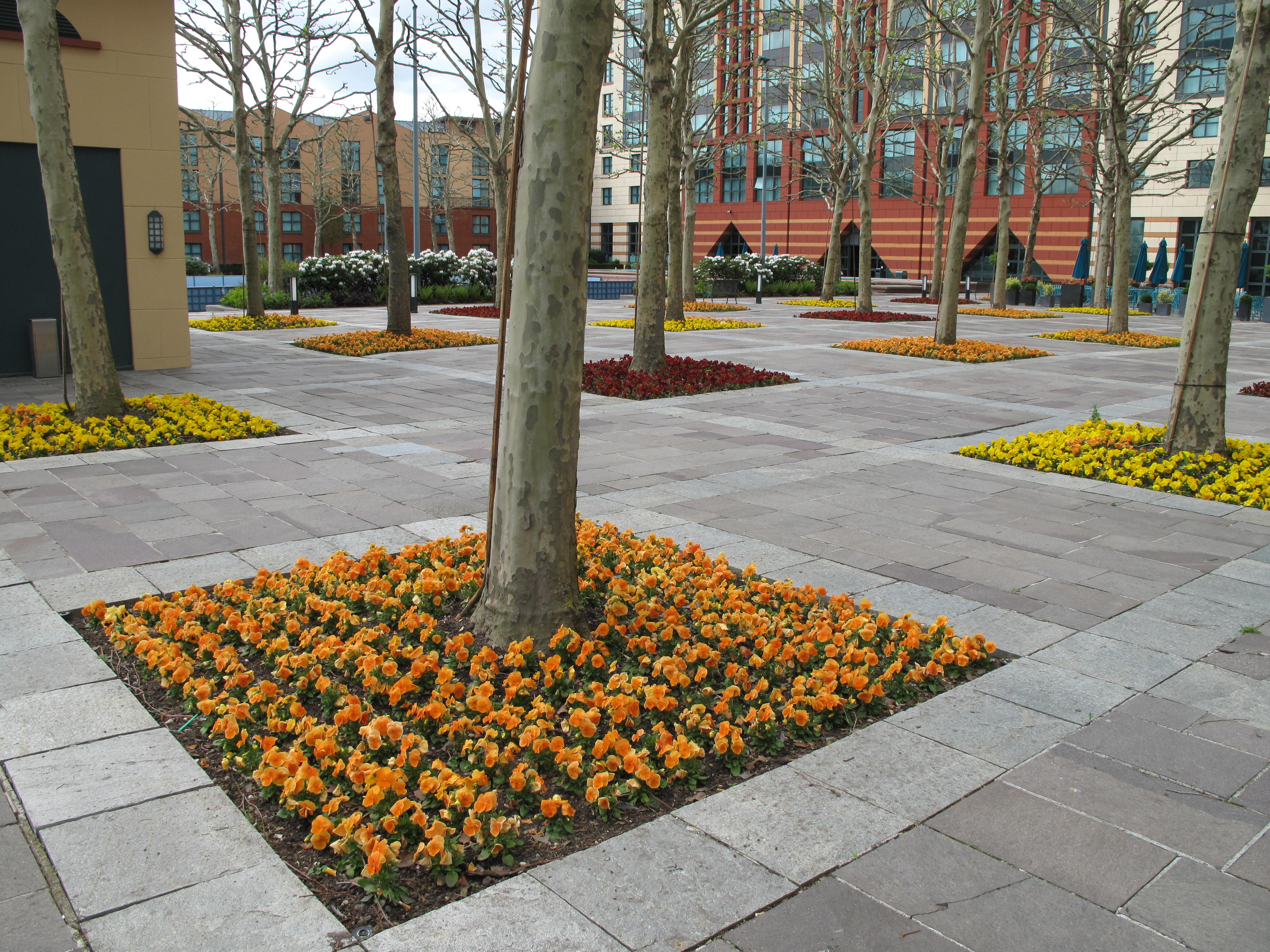Flower Bed Of The Hotel