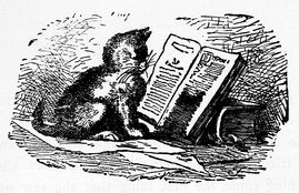 Datei:Kitten reading a book.jpg