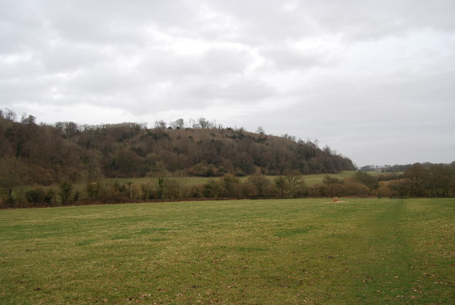 Noar Hill Hanger from the Hangers Way - geograph.org.uk - 1202236