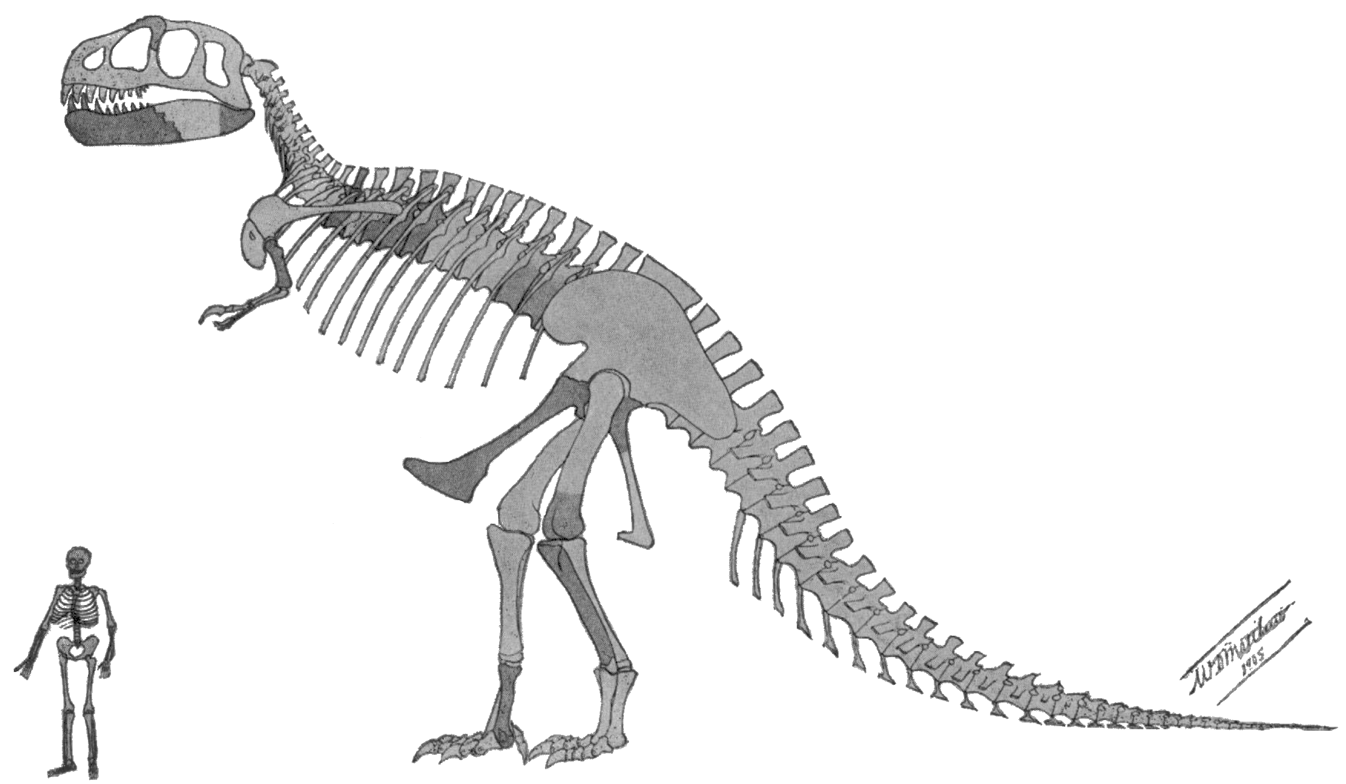 Original Tyrannosaurus Scale Description.png