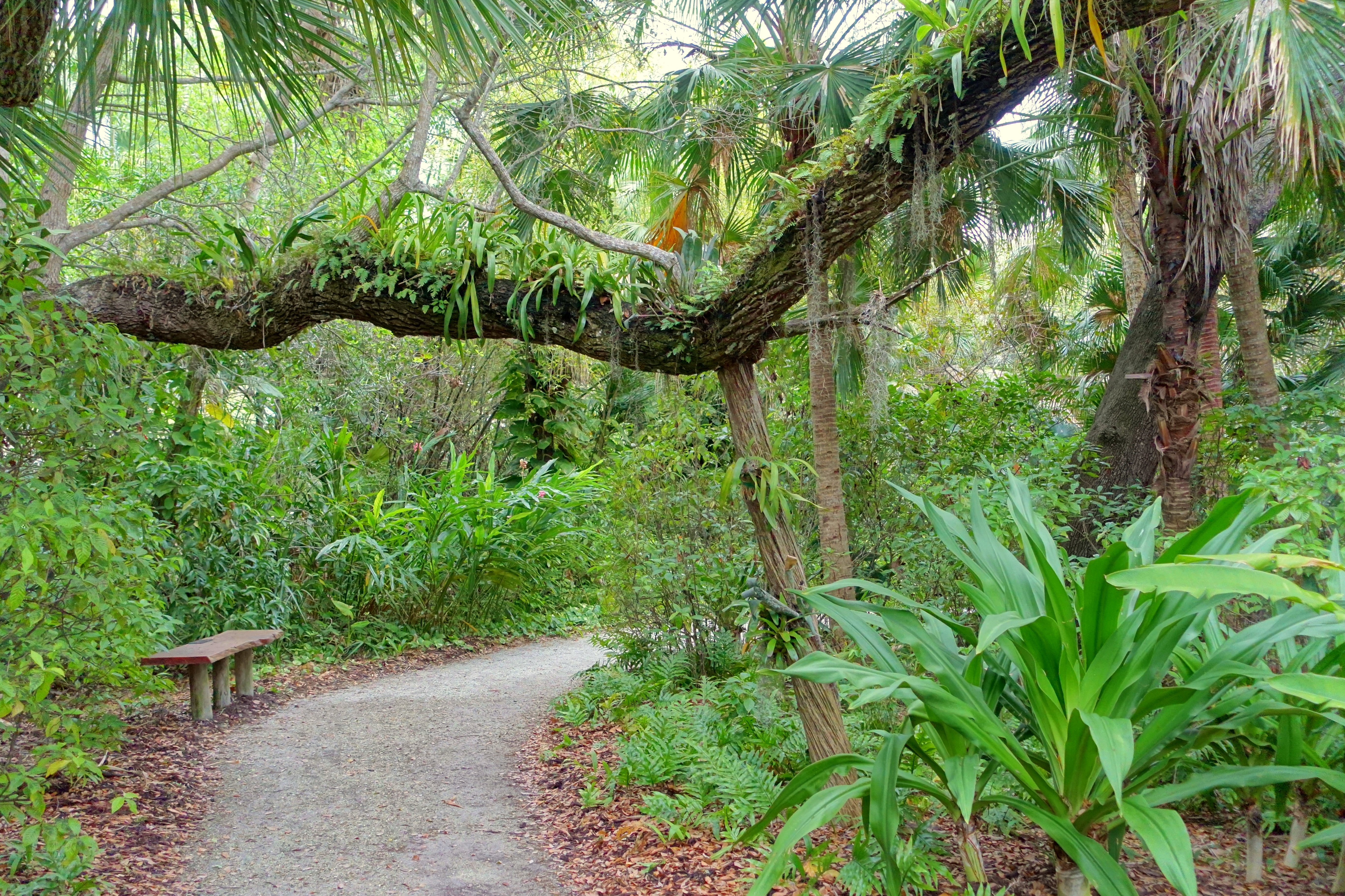 File:Pathway - McKee Botanical Garden - Vero Beach, Florida ...
