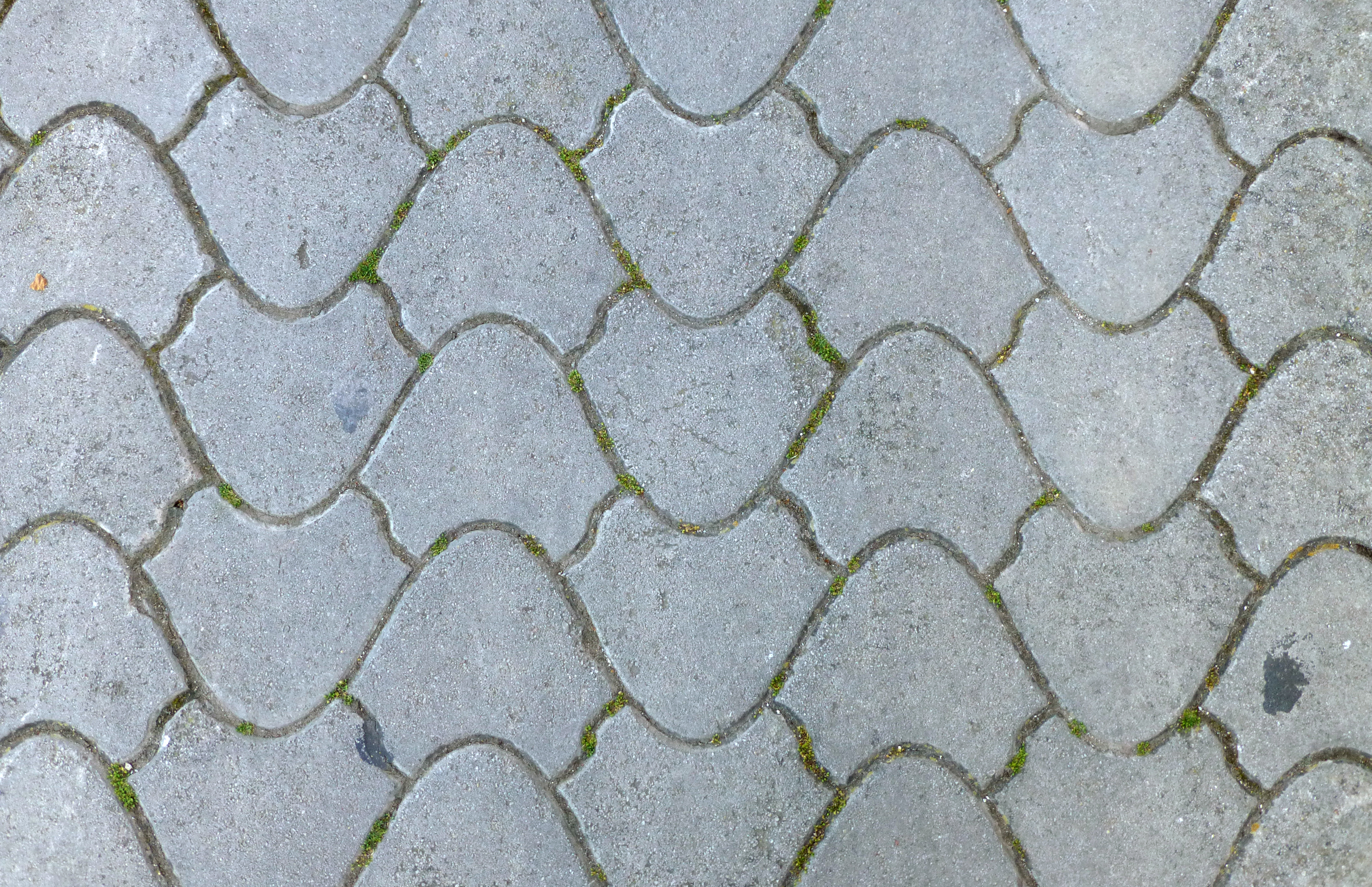 File Pavement Texture Round Tiles Jpg Wikimedia Commons