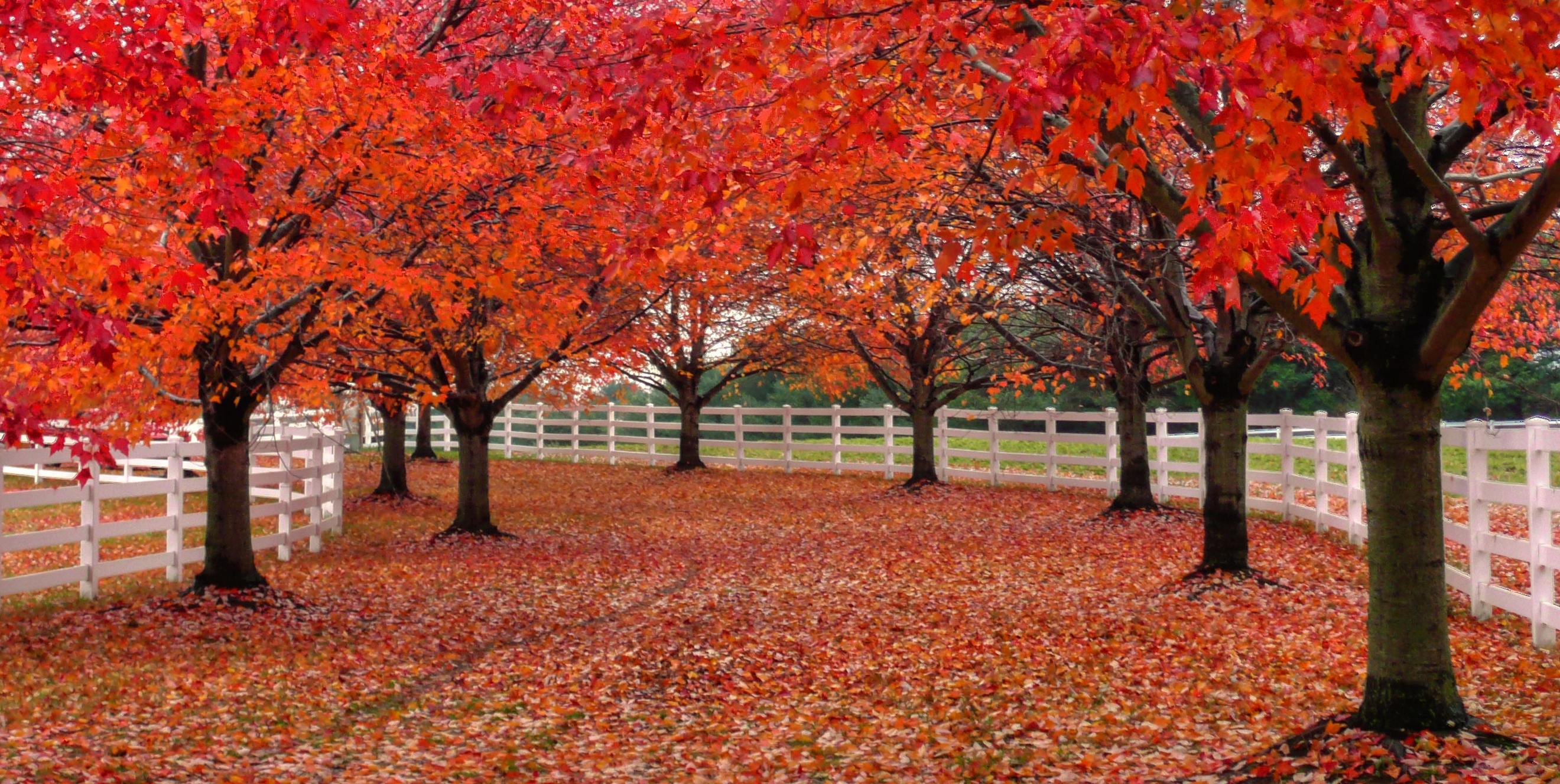 List of Synonyms and Antonyms of the Word: september trees
