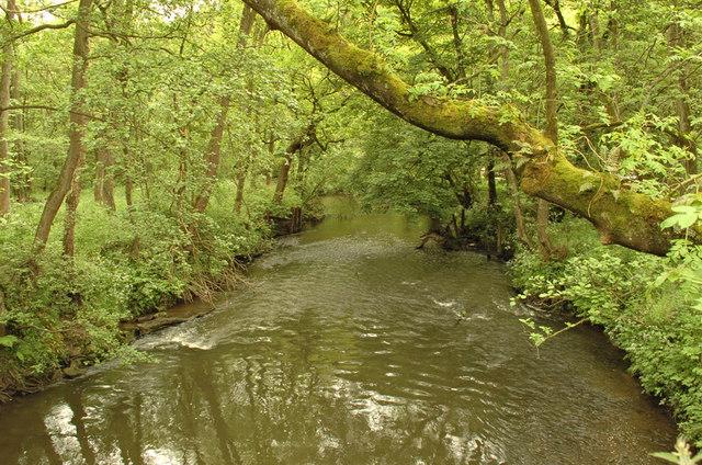 River Churnet - geograph.org.uk - 1326170