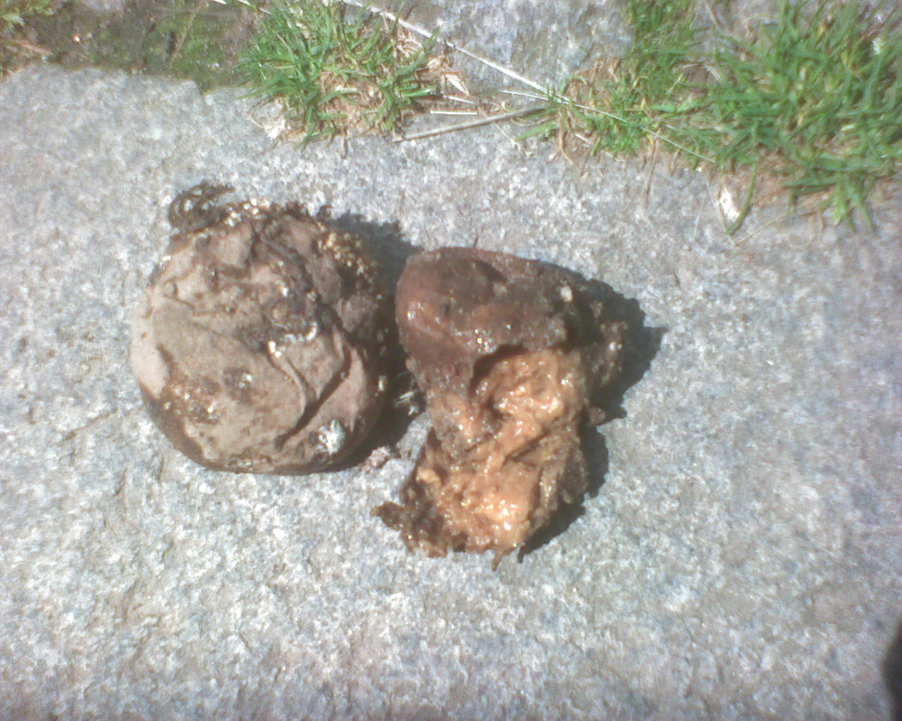 rotten potatoes how to tell