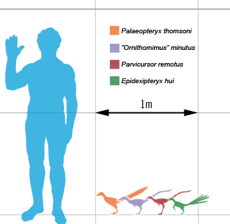 Smallest theropods scale mmartyniuk