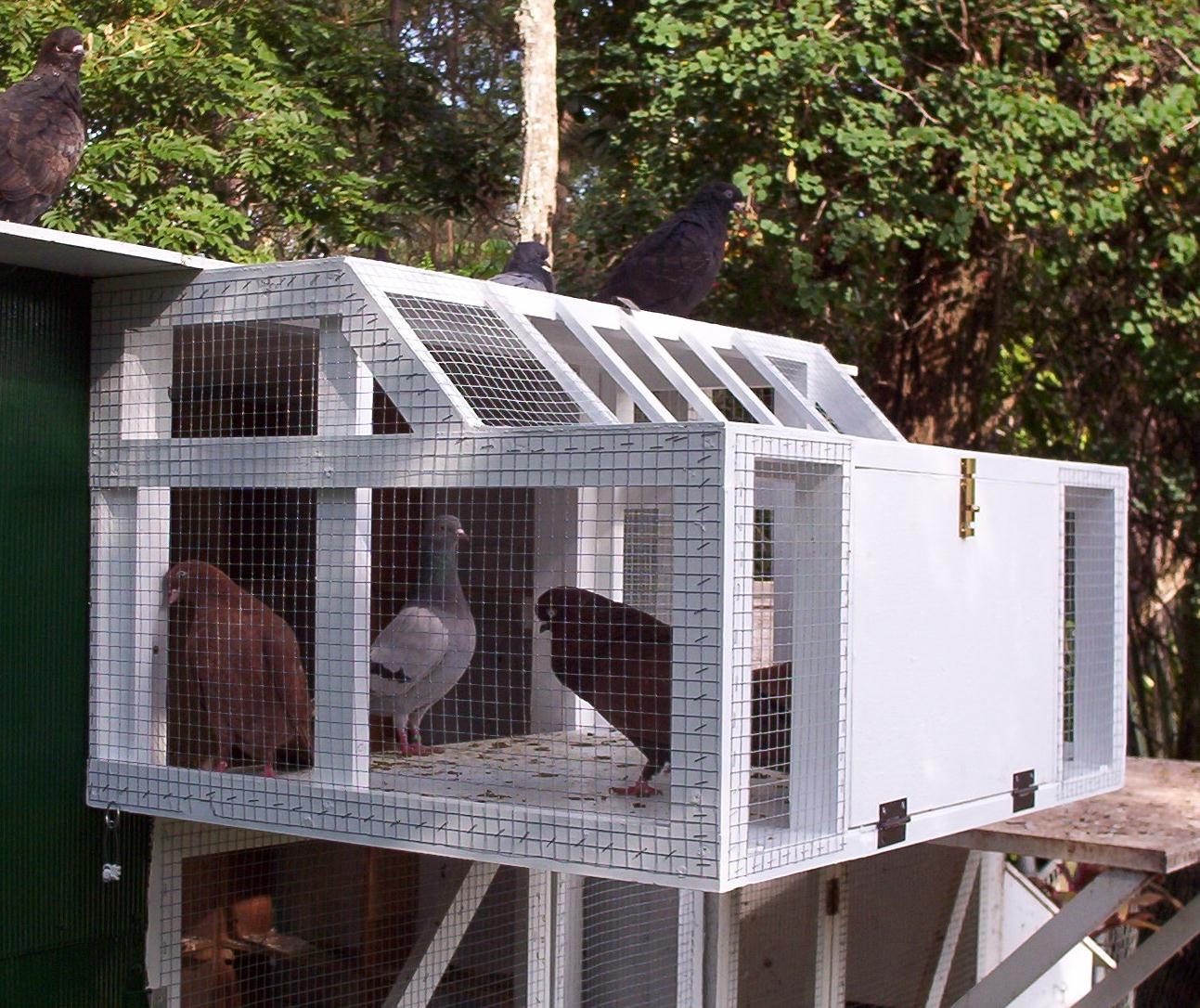 Image Result For Pigeon Coop For
