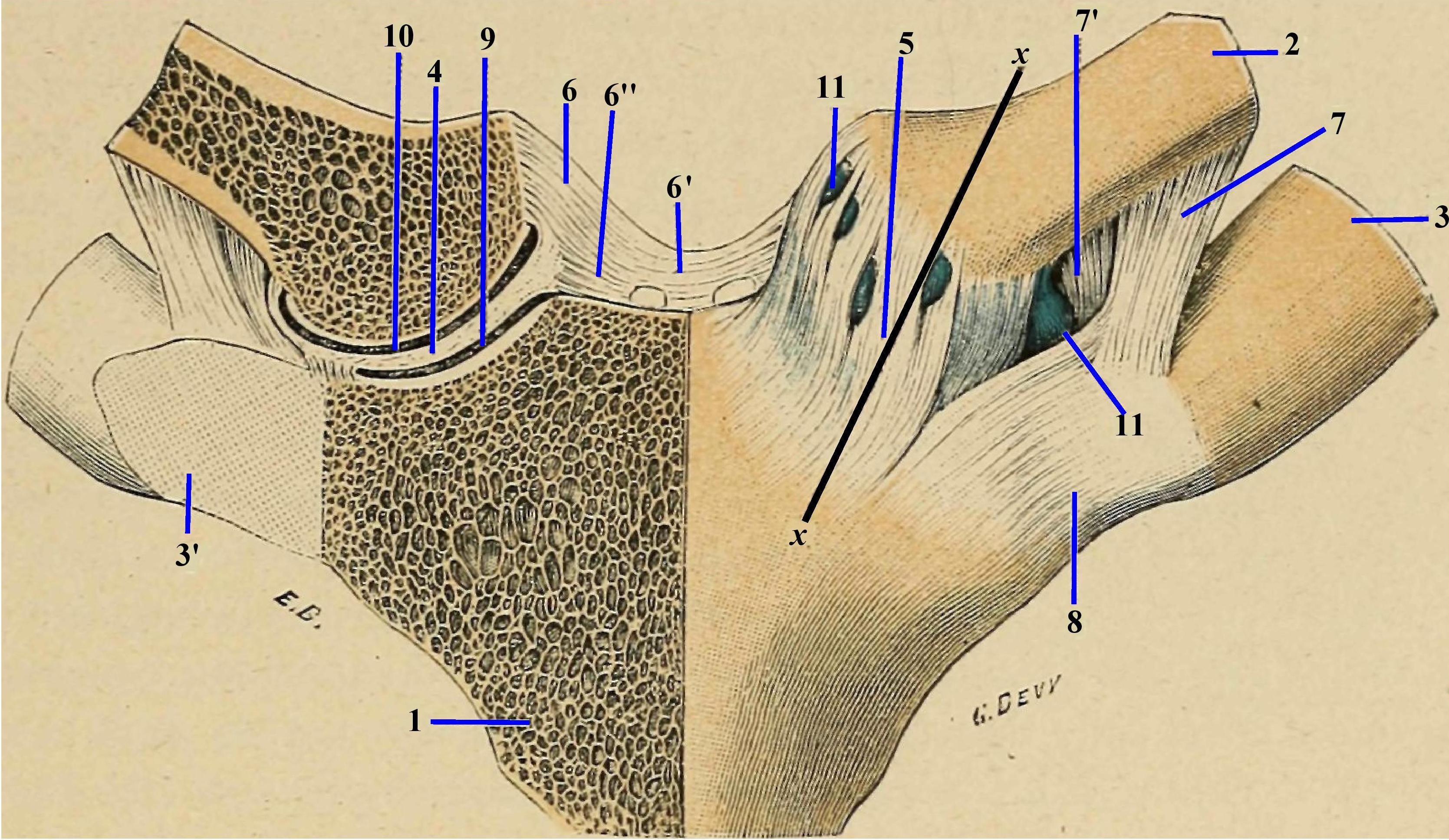 Boala articulară a sternului clavicular