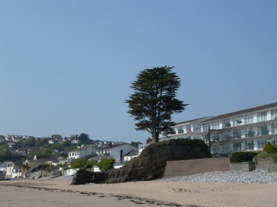 Tree on Saundersfoot beach - geograph.org.uk - 506221