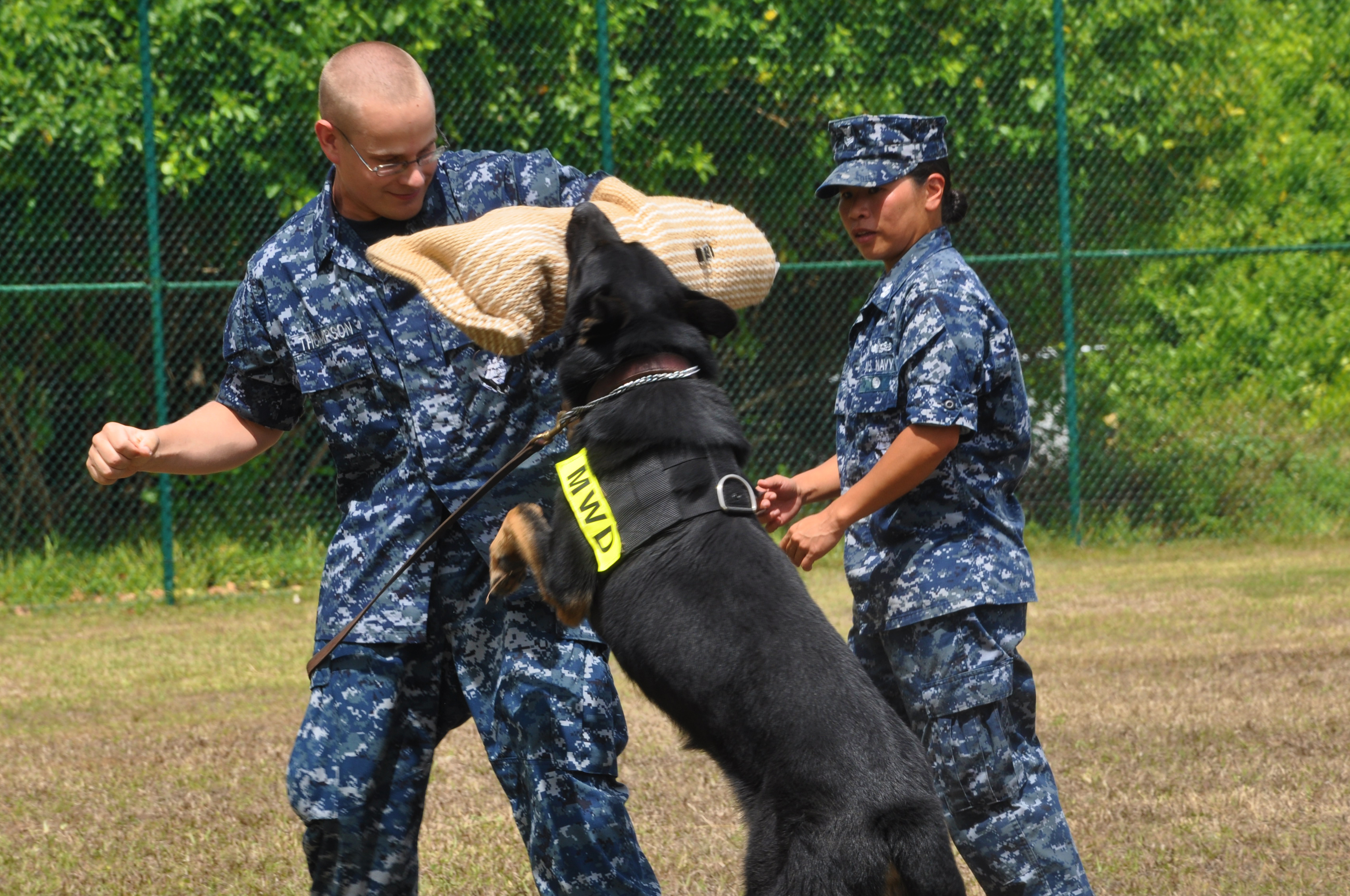 Image Result For Protection Dog Training