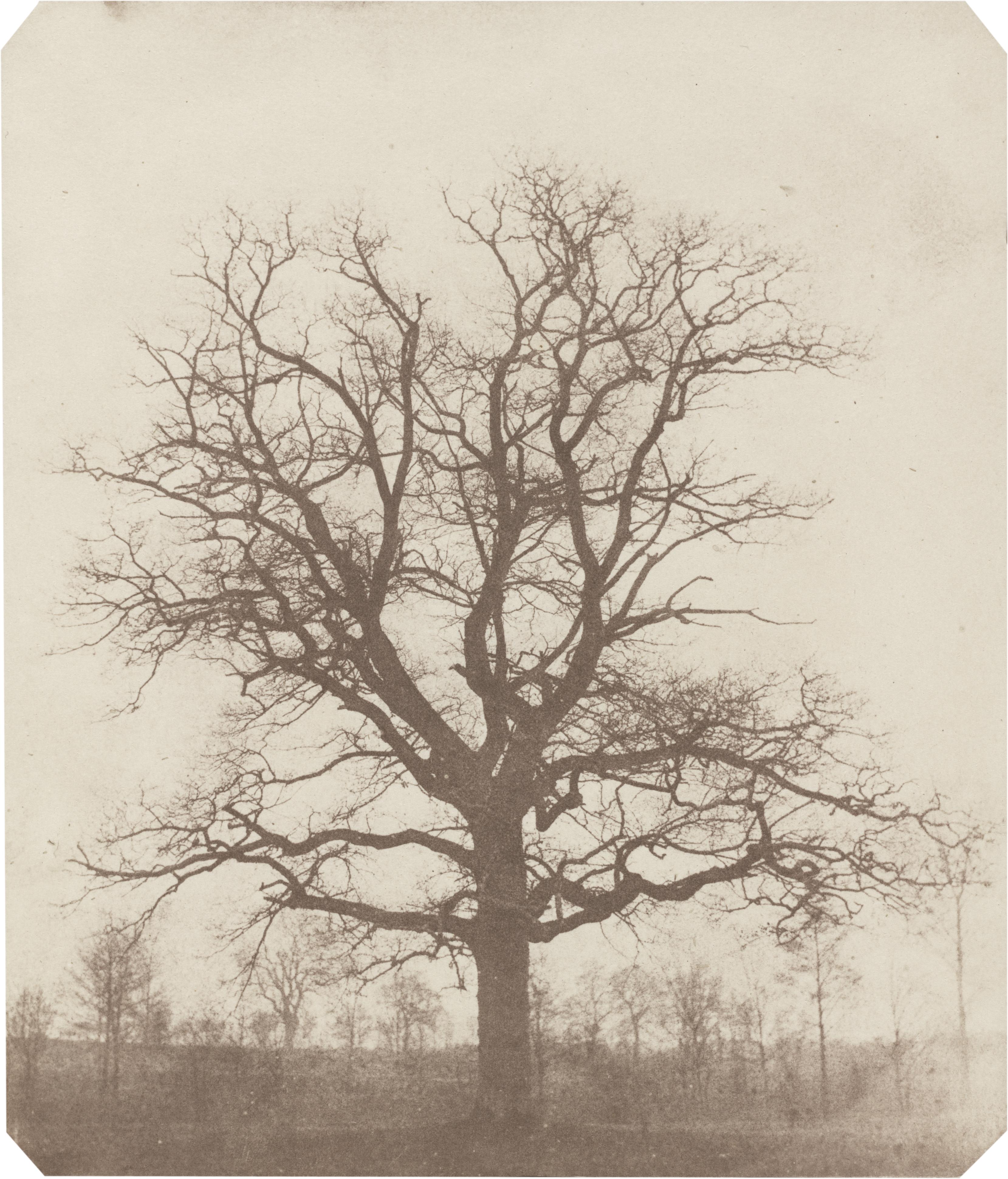 File:William Henry Fox Talbot, Oak Tree, mid-1840s, NGA 92227.jpg