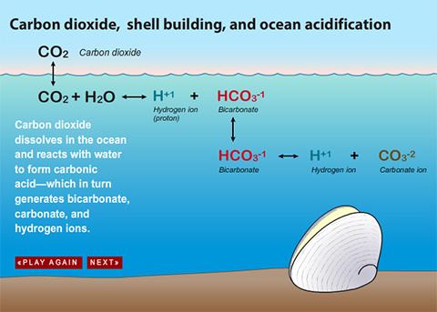 File:Ацидификација на океани.jpg