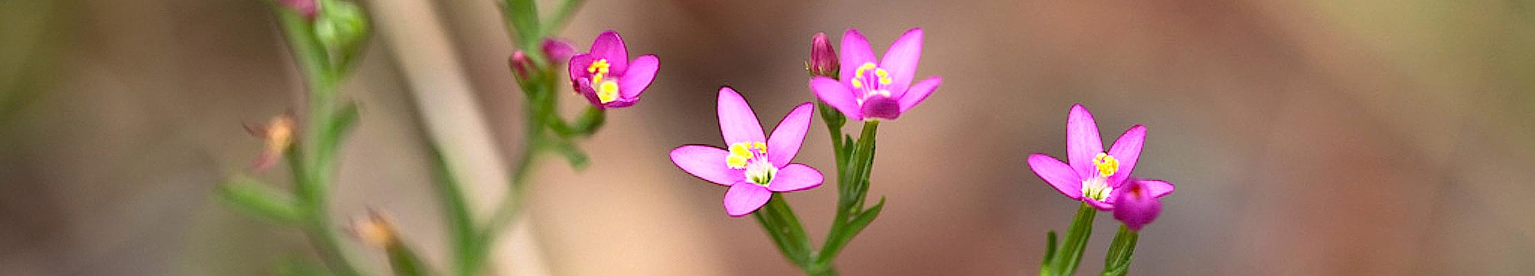 Неизвестные лесные цветы Австралии.