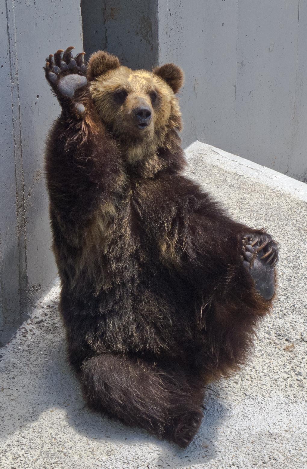bear what