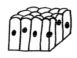 columnar transportation A double transposition, also known as a double columnar transposition, was used by the us army in world war i, and it is very similar to the german's übchi code it is just a columnar transposition followed by another columnar transposition.
