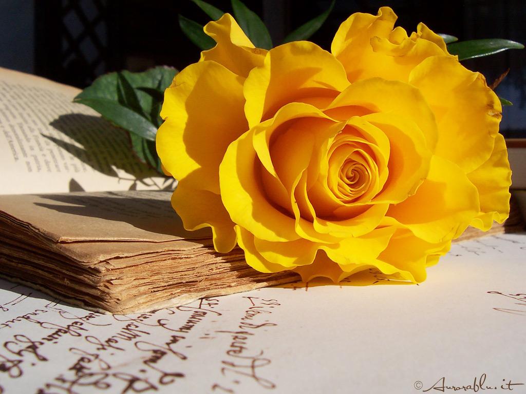 literature wallpaper yellow - photo #30