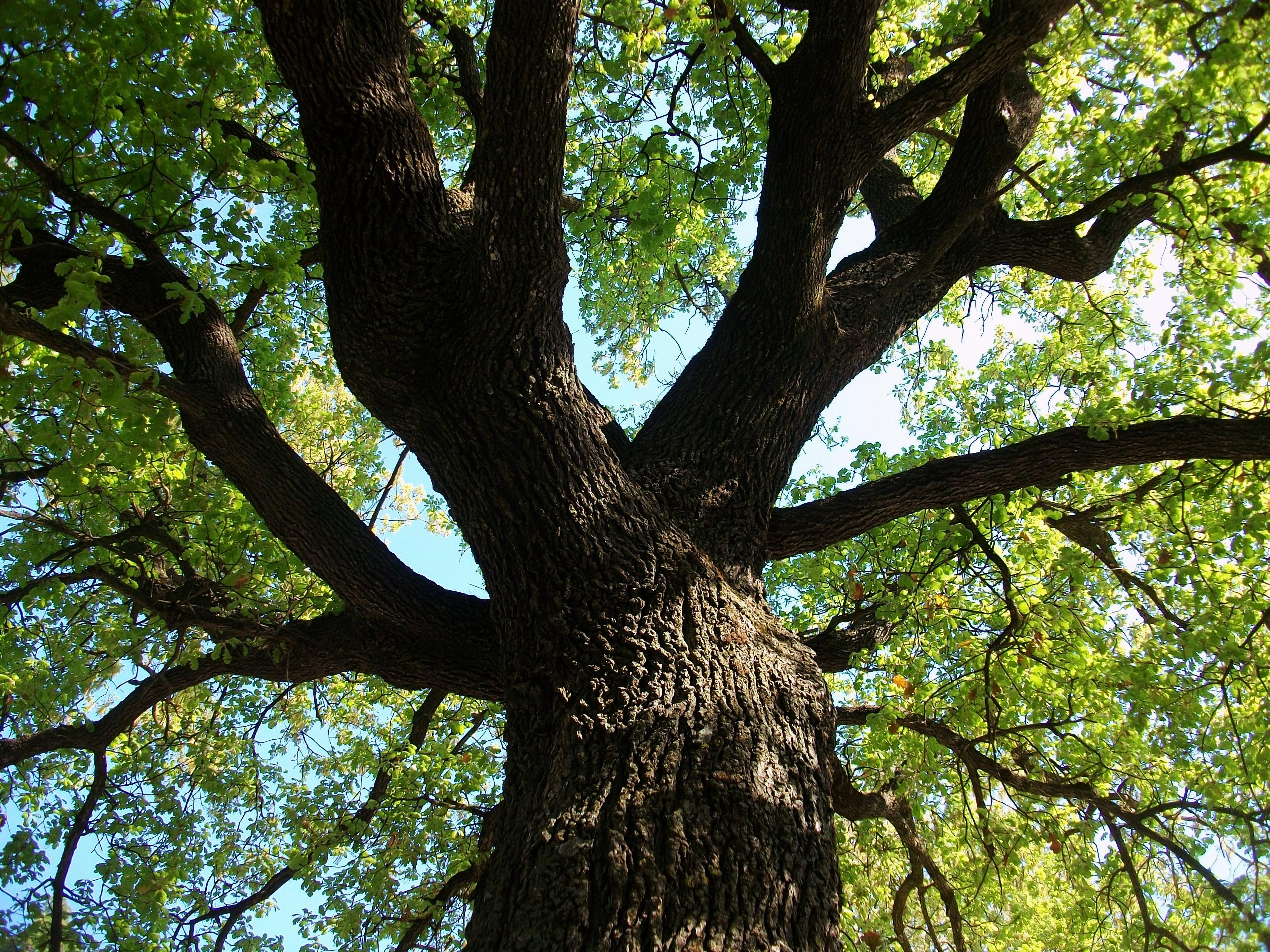 file arbre a ol mpia jpg wikimedia commons