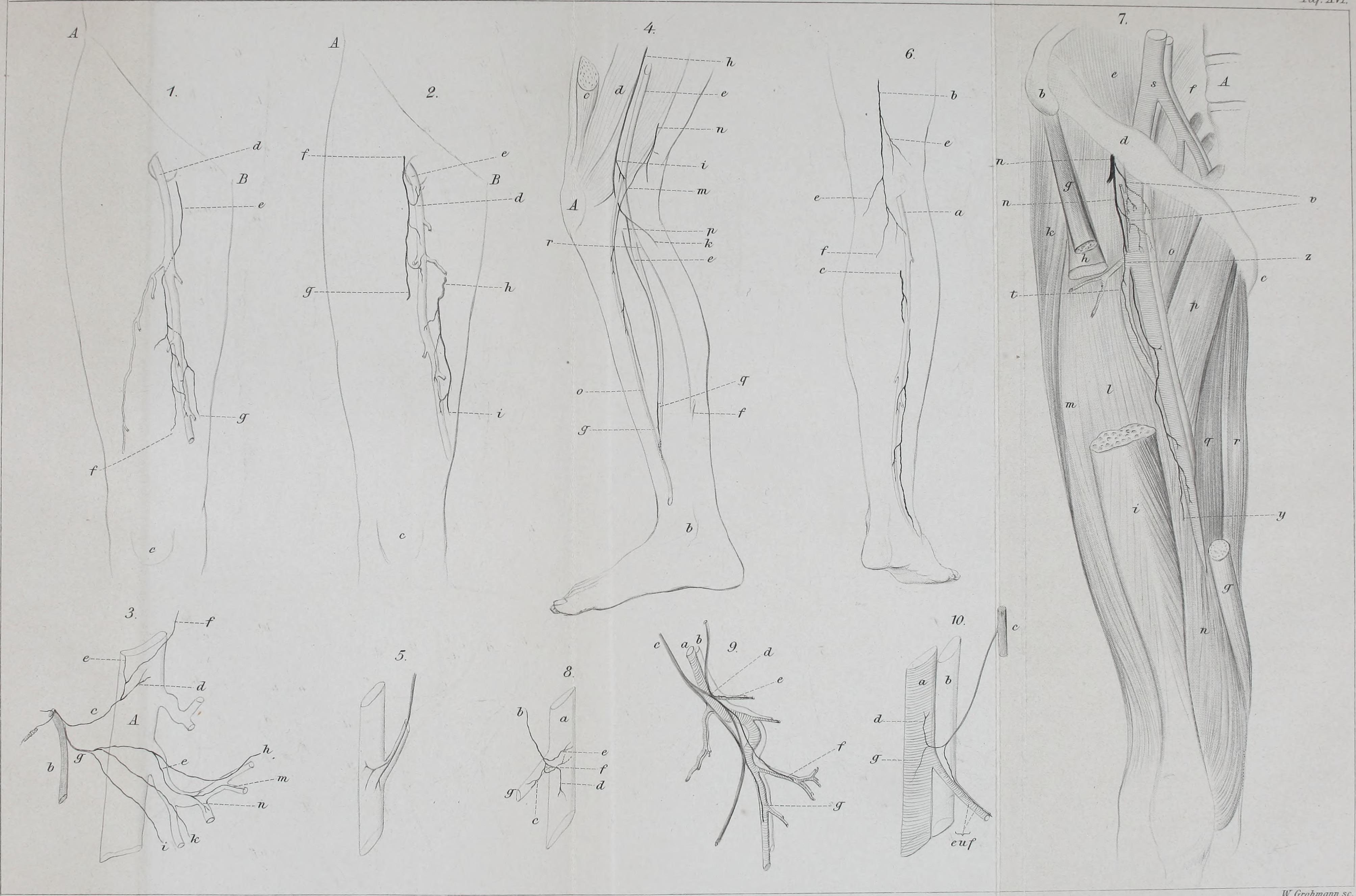 Ziemlich Bärenmuskelanatomie Bilder - Anatomie Ideen - finotti.info
