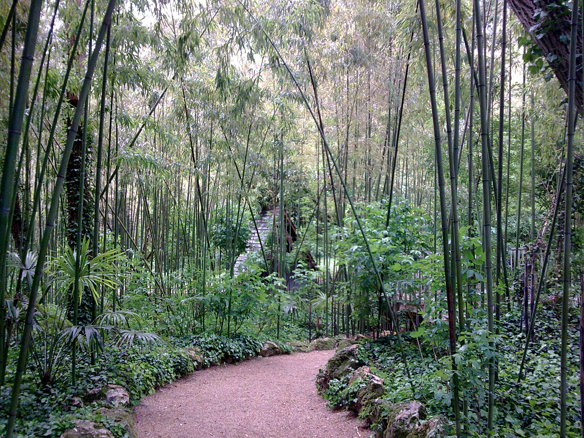 bamboo plants path