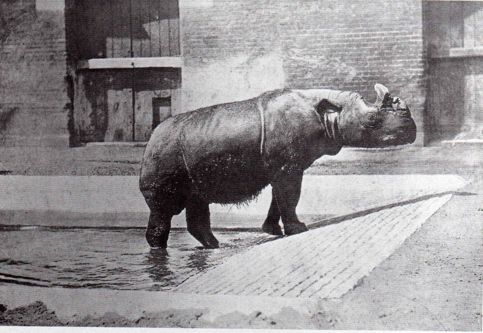 Nature civilized: A cultural history of American zoos, 1870--1940