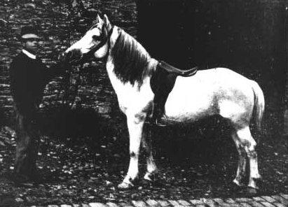 Bidet horse