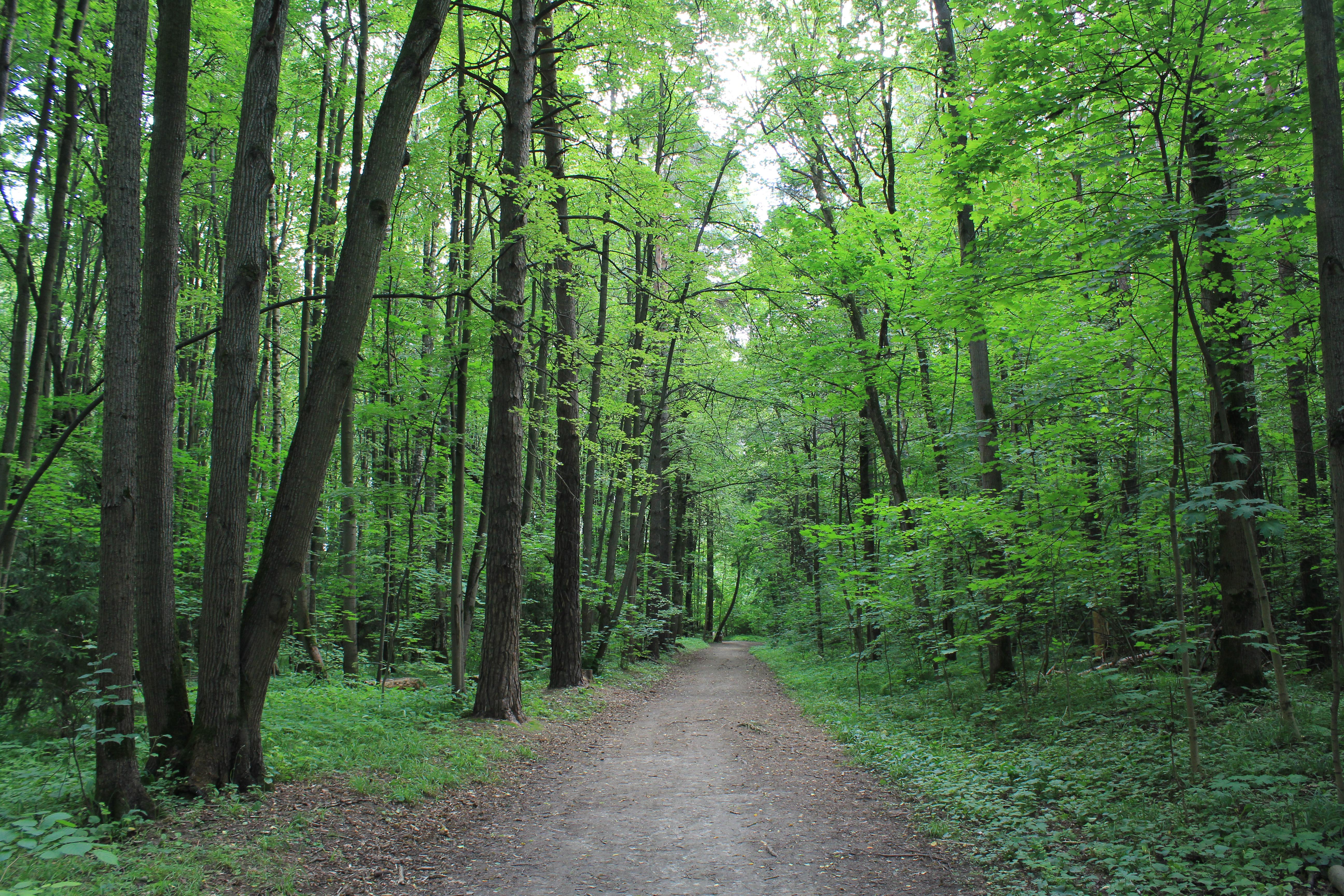 莫斯科森林公园