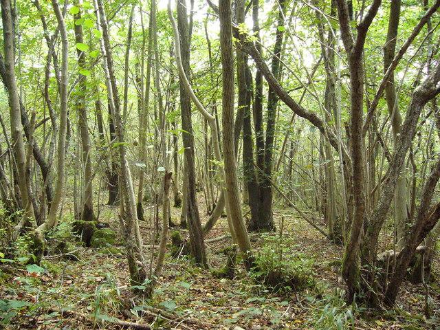 Brigsteer Woods - geograph.org.uk - 1546838