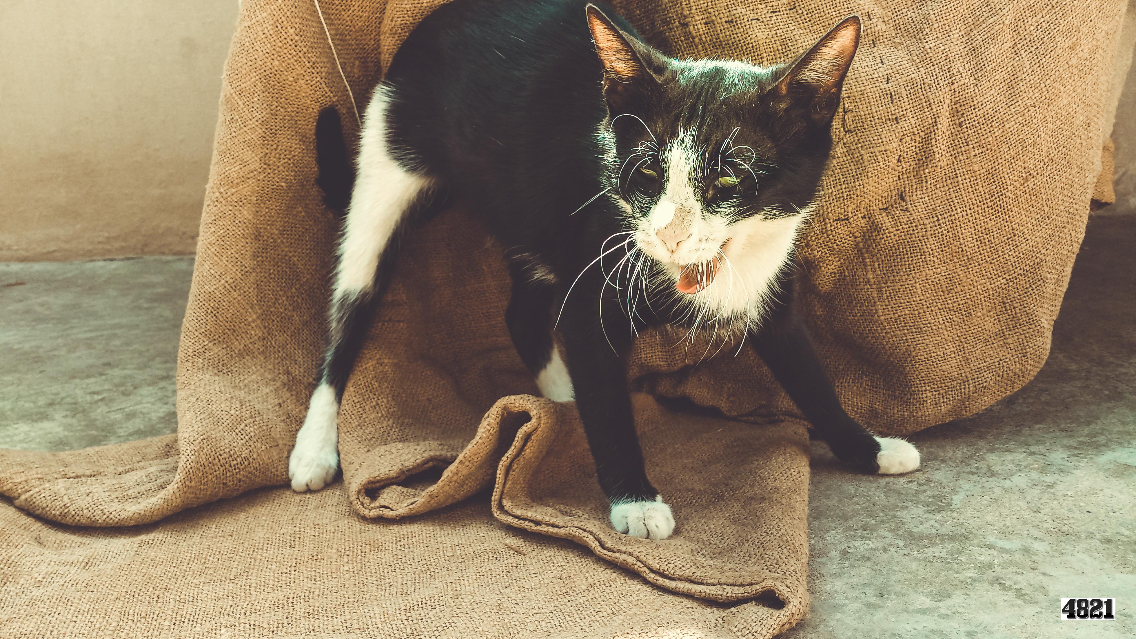 File:Cat kedi pisik svln4821 04.jpg