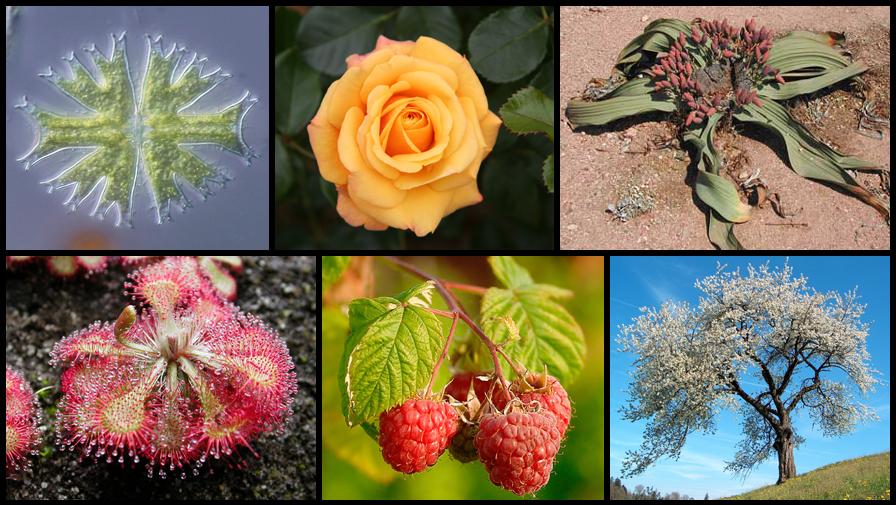 Diversity of plants image version q.png