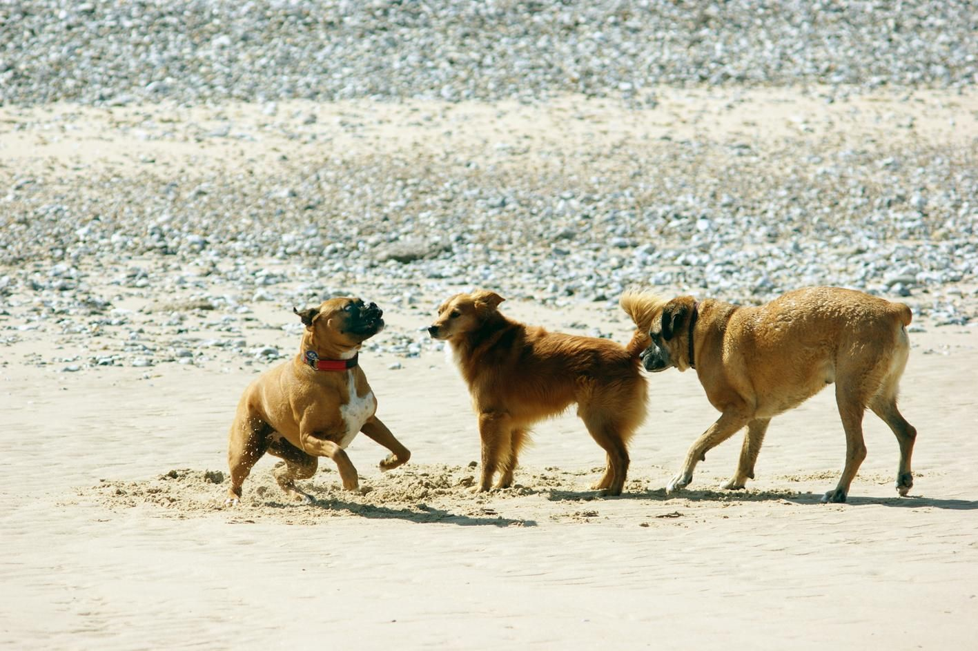 Sri Lanka Dog Rescue