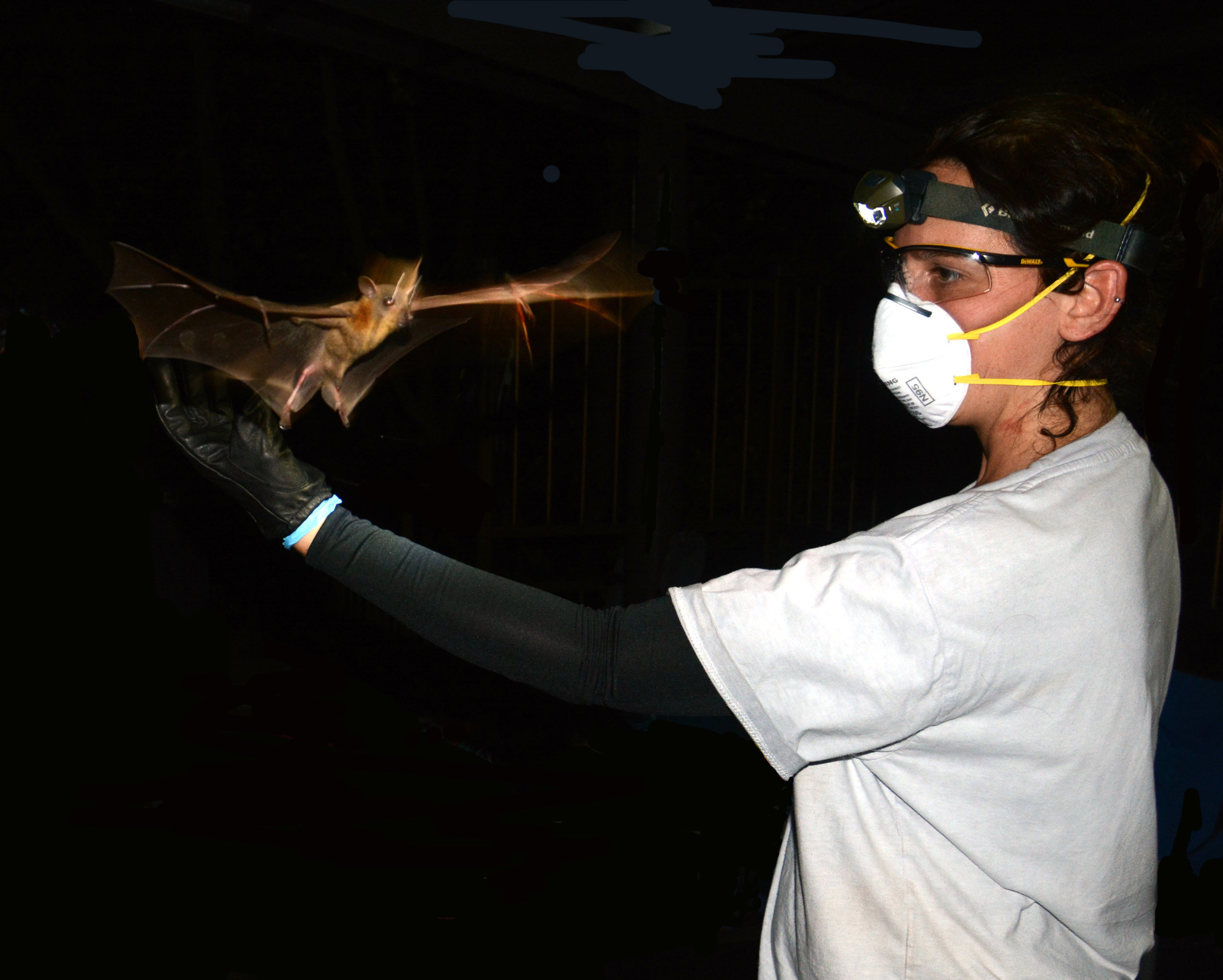 Source of coronavirus |  Can bats infect human directly? | The Encyclopedia