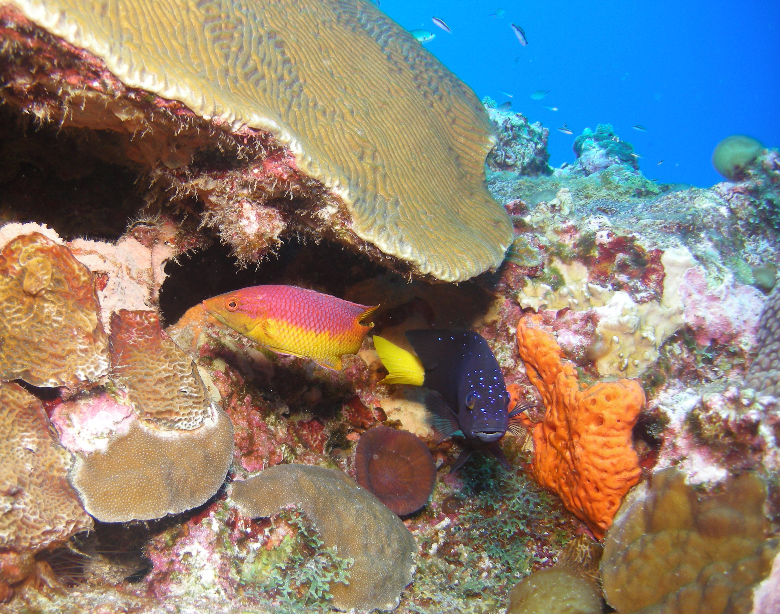 One Cool Thing: Deep-sea Paradise