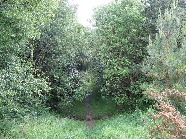 Footpath through Bramshill Plantation - geograph.org.uk - 1343783