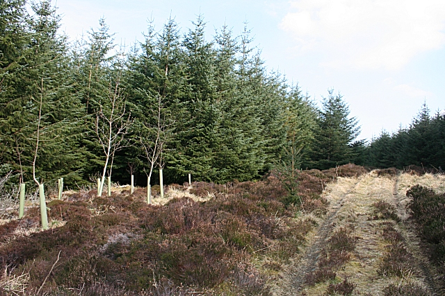 File:Forest Track - geograph.org.uk - 1232372.jpg