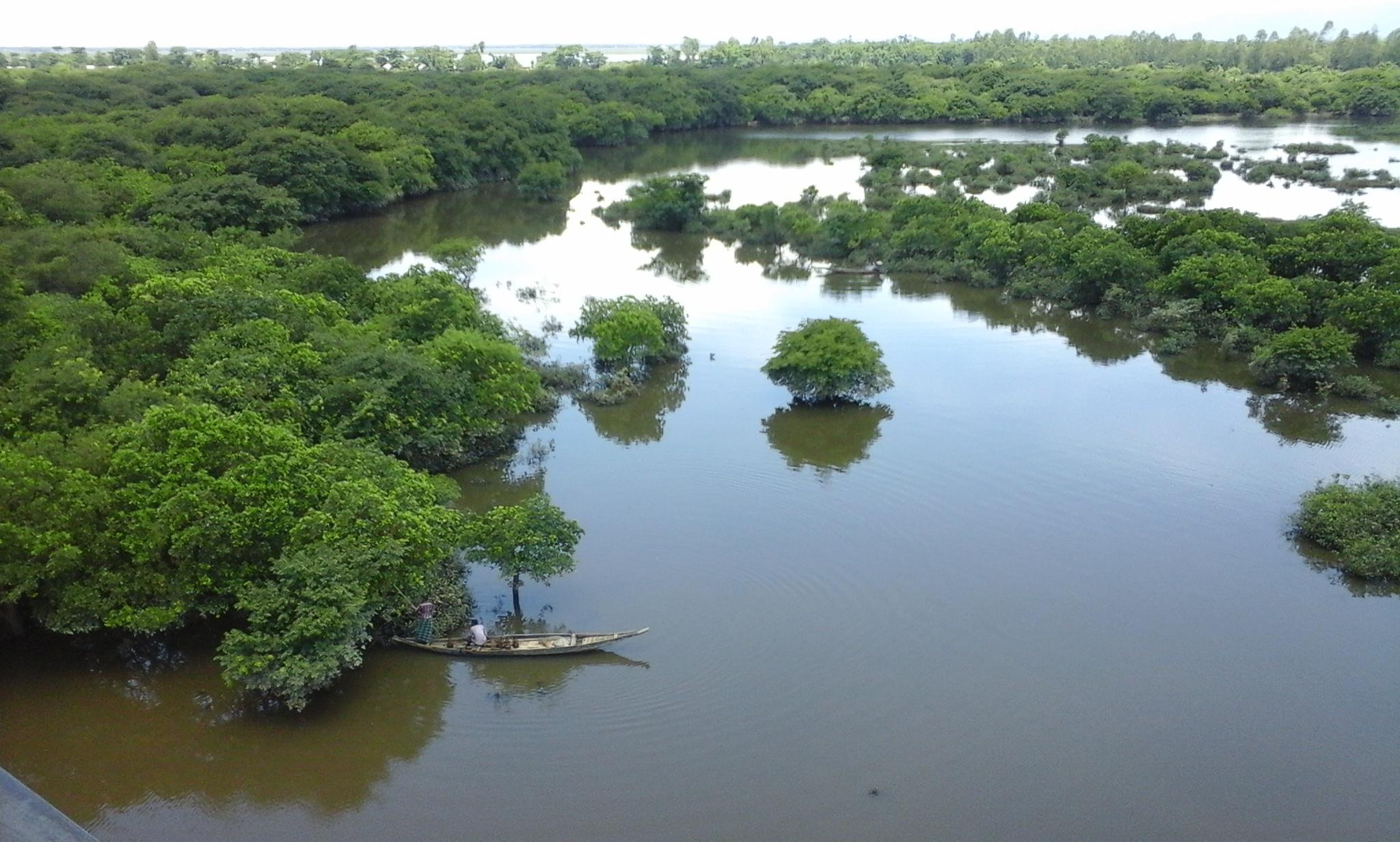 Wetland - Wikipedia