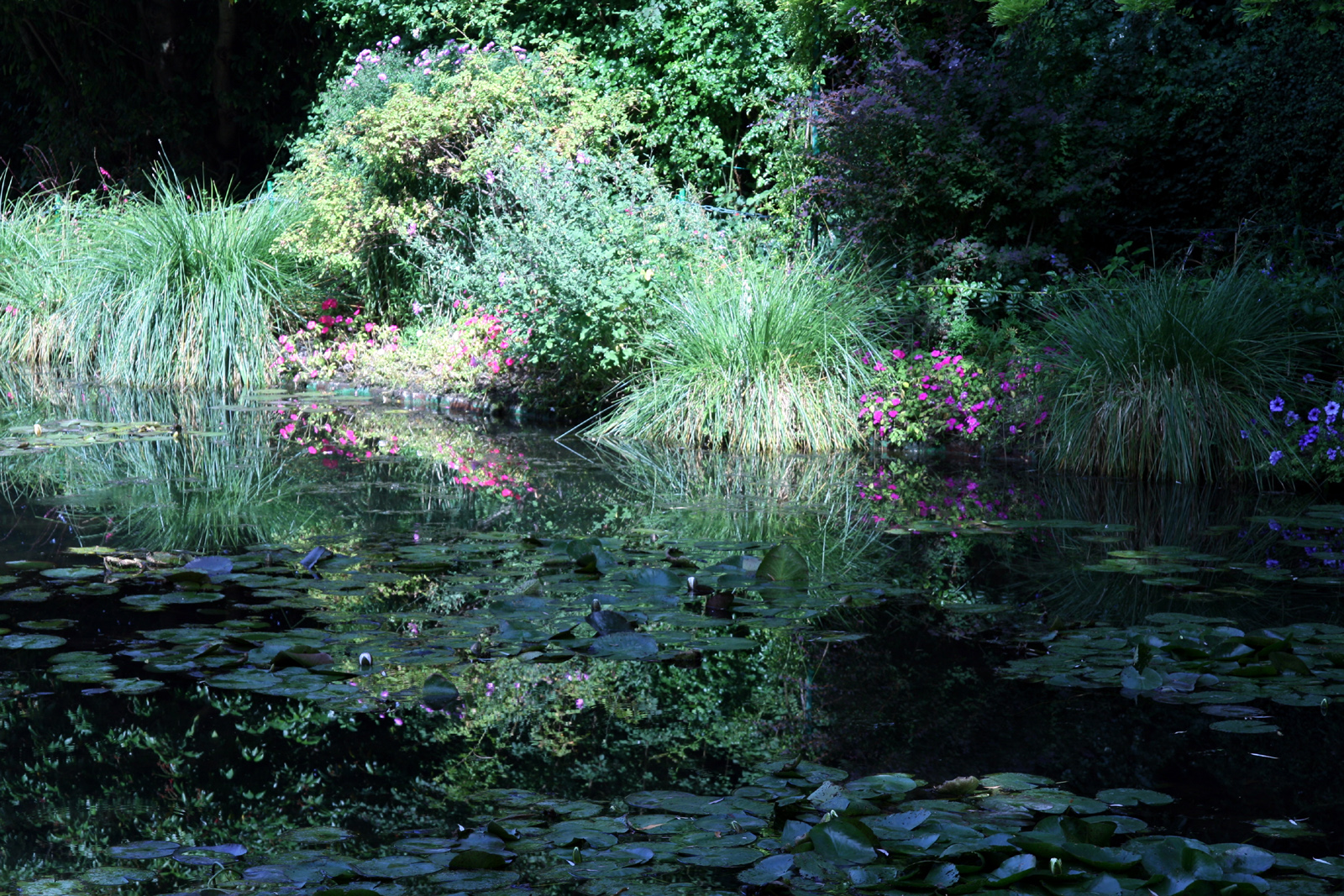 File giverny jardin monet 7 jpg wikimedia commons for Jardines monet