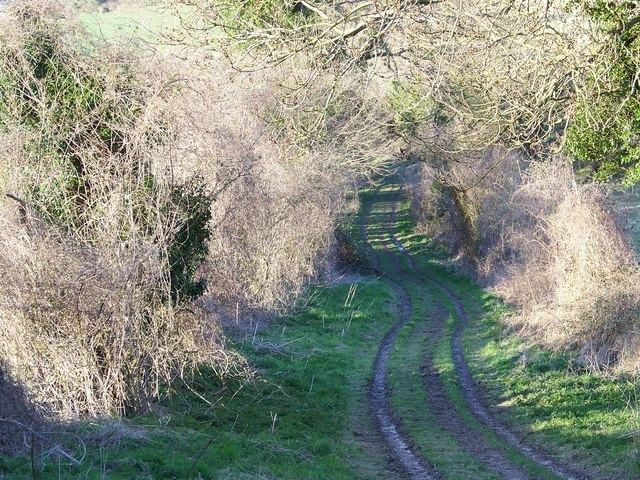 Gypsy Lane (Track), Coombe Bissett - geograph.org.uk - 744693