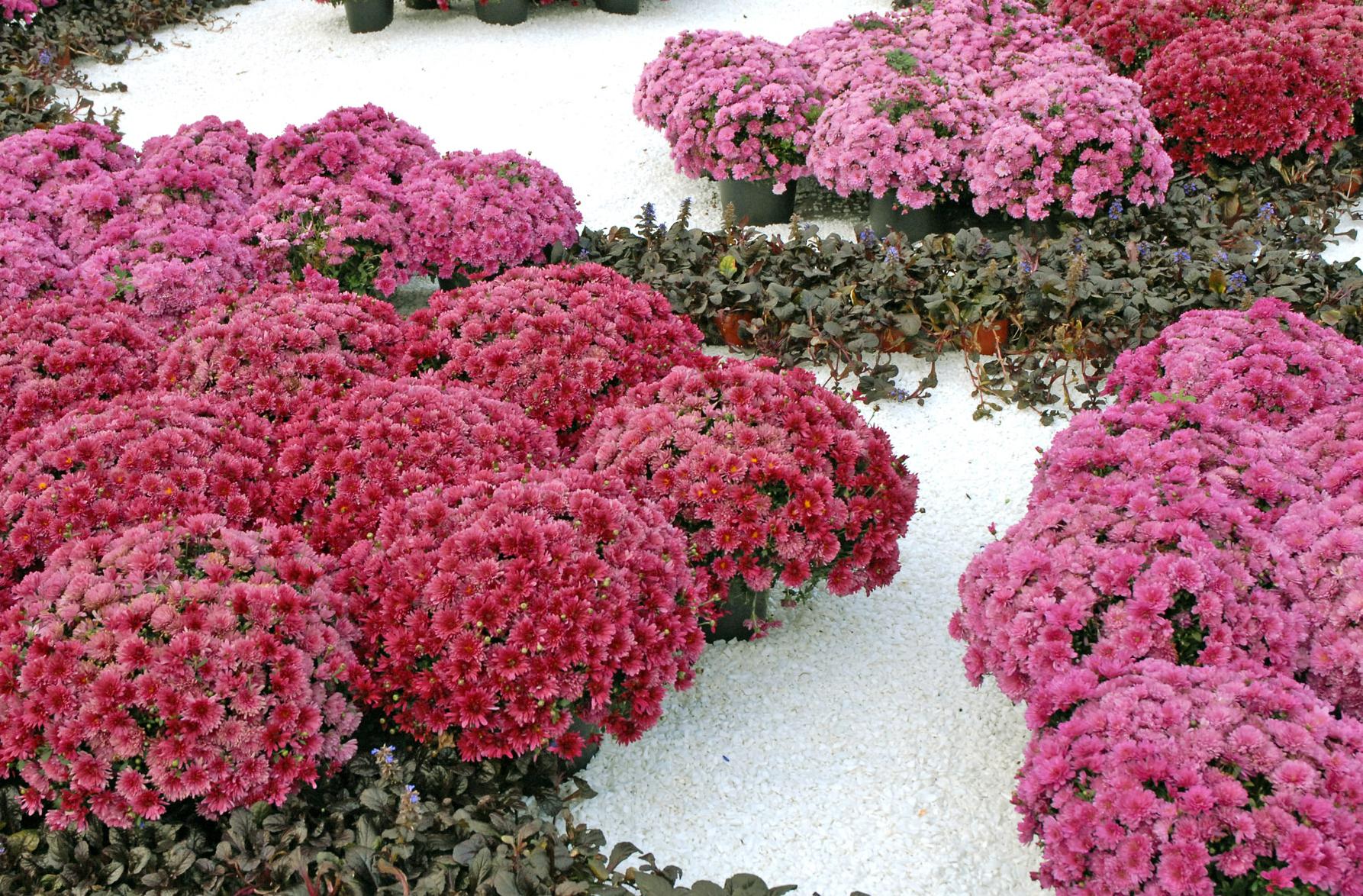 Jardin fleurs   Gite pompadour lubersac